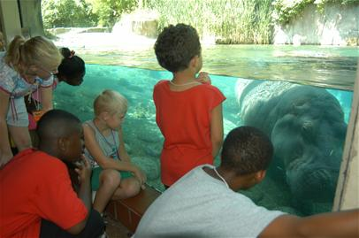 Children watching for Hippos at the zoo.jpg