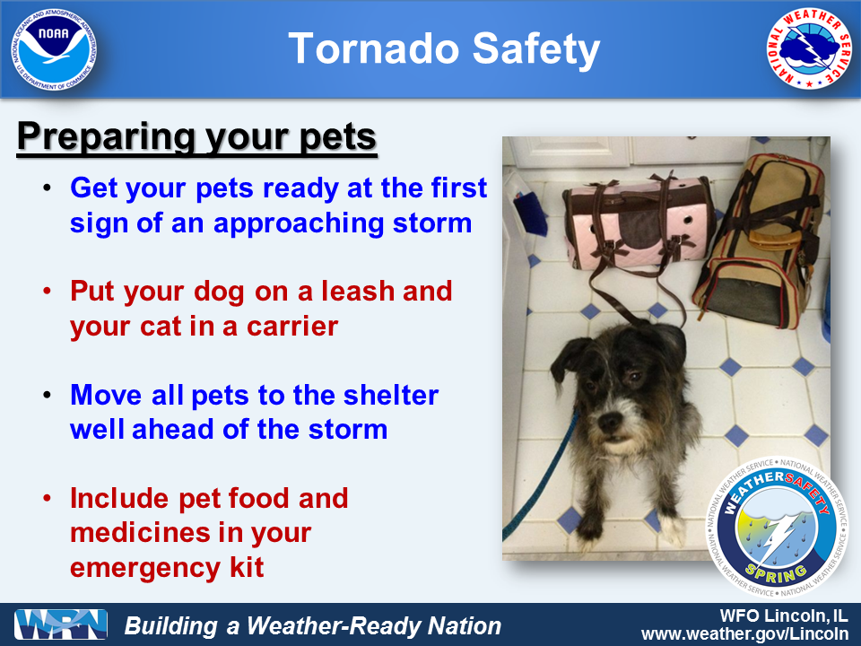 What to do with your pet in a tornado