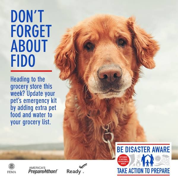 pet-preparedness-dont-forget-about-fido