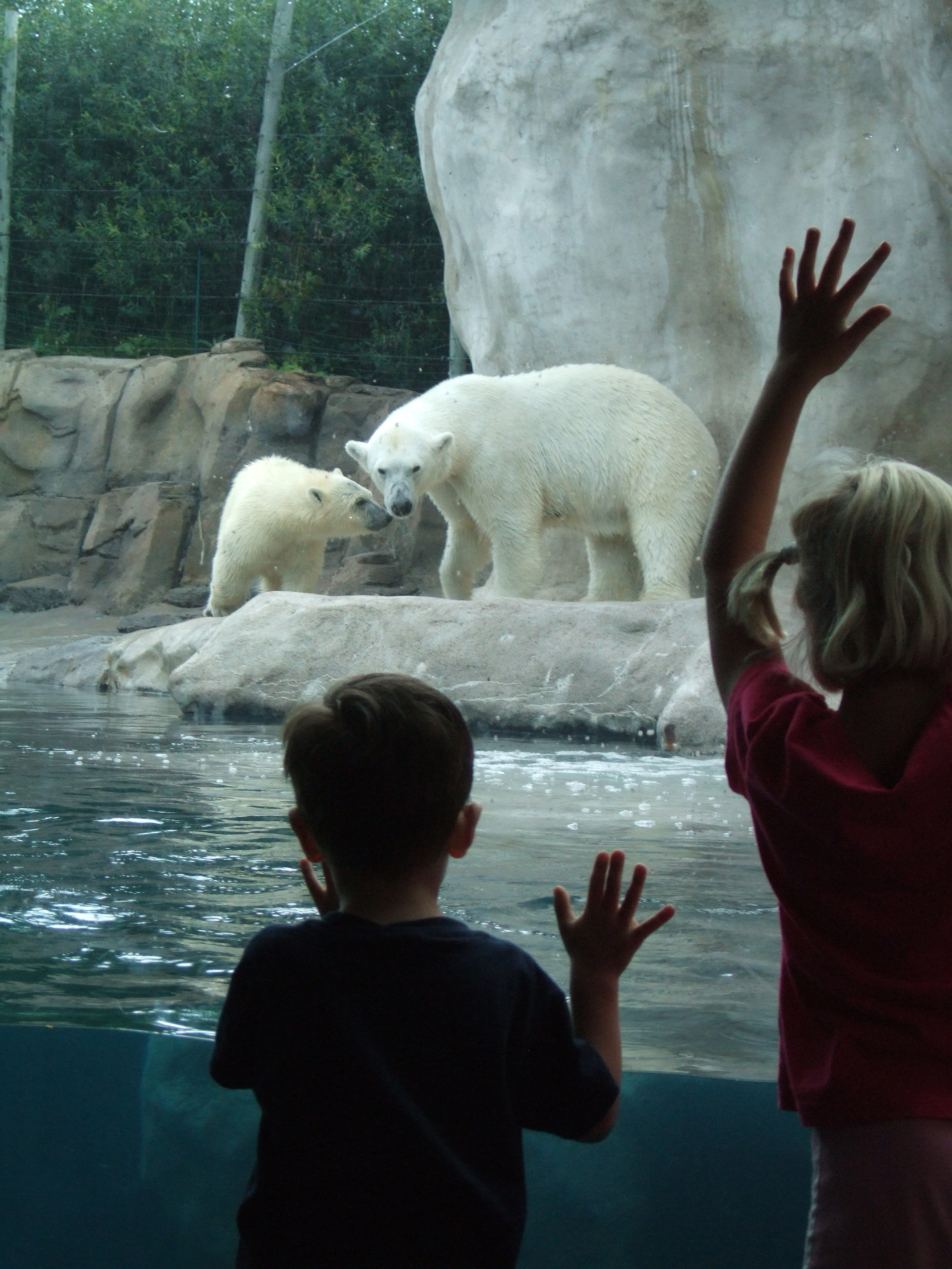 Toledo Zoo - Polar Bears